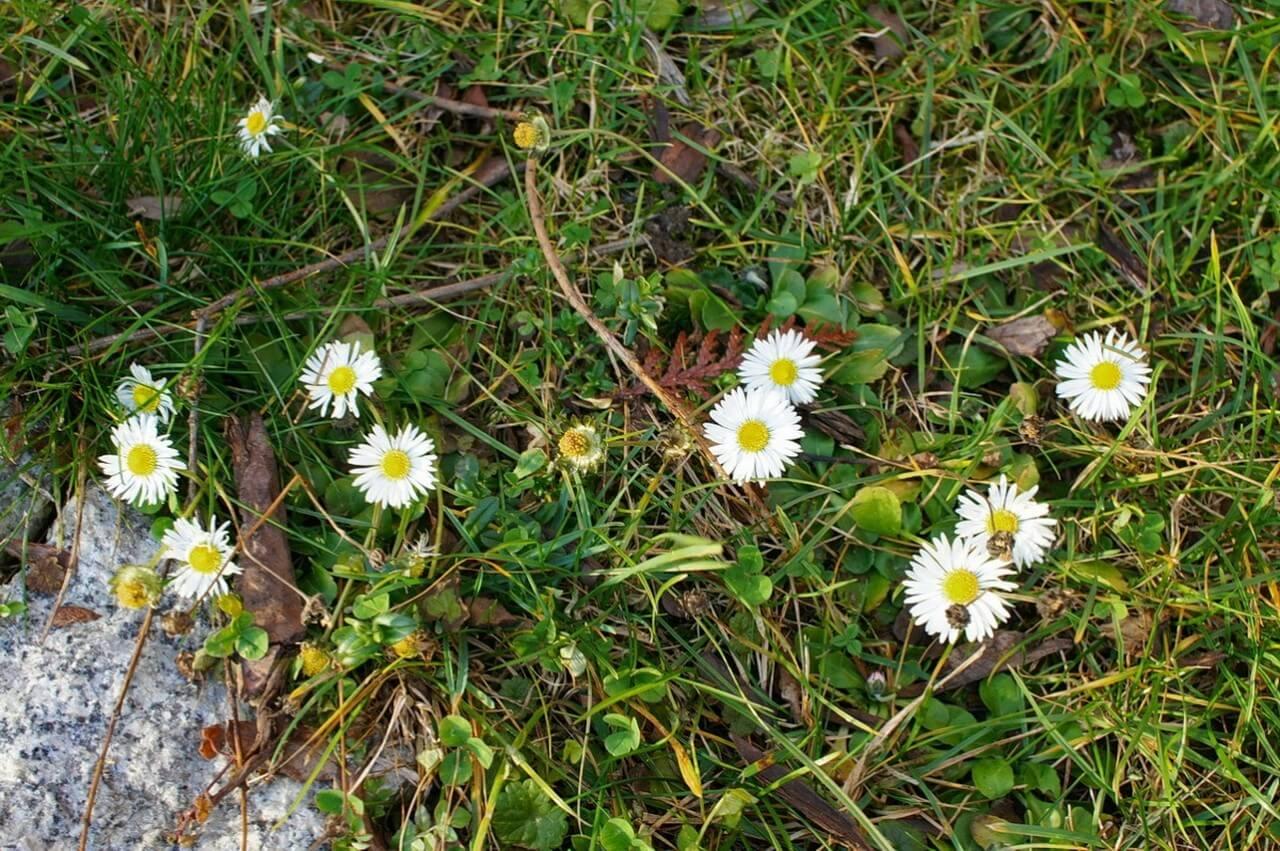 wiosna-4 (Kopiowanie)